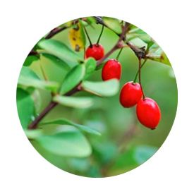advanced-biotic berberine