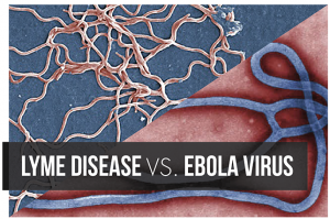 Lyme Disease vs Ebola Virus