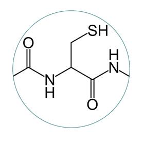 mitochondrial support glutathione