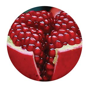 Prevention Plus ingredient Pomegranate Extract