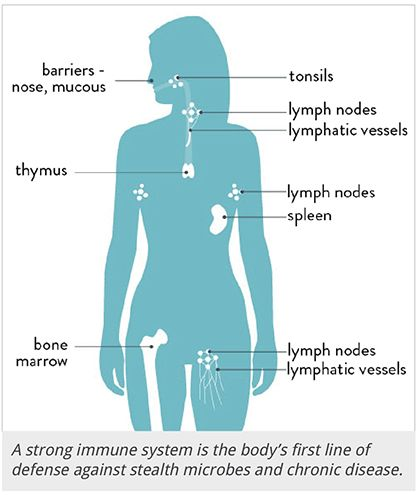 how the immune system works | rawlsmd, Human Body
