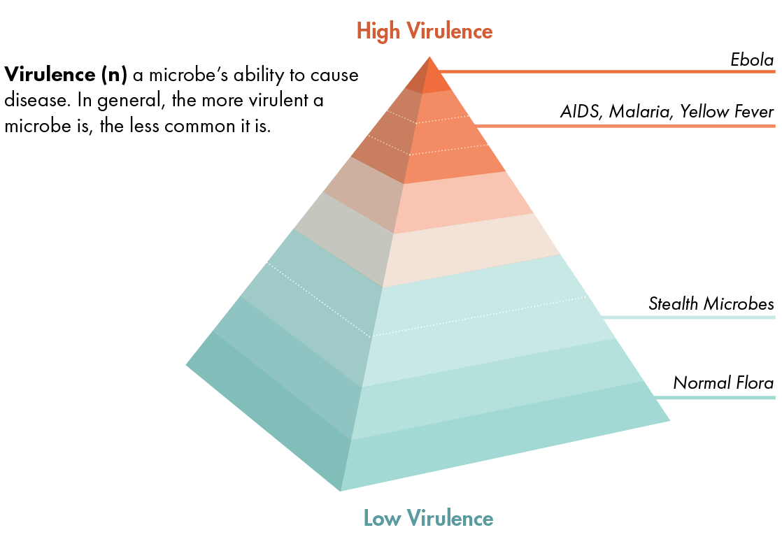 virulence pyramid