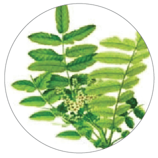 Joint Care ingredient boswellia