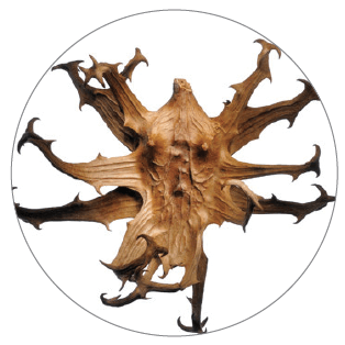Joint Care ingredient Devil's Claw Root