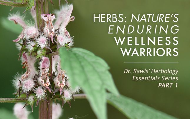 Herbs: Nature's Enduring Wellness Warriors