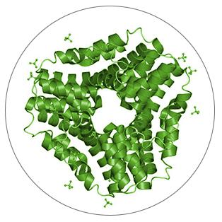 Chlorella nutrient Carotenoids