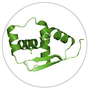 Chlorella nutrient Protein