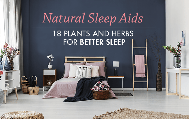 Natural Sleep Aids, 18 plants and herbs for better sleep