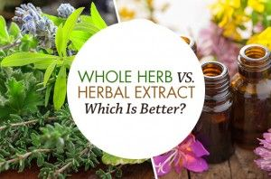 Whole Herb Vs. Herbal Extract- Which Is Better