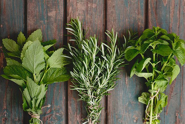 Whole Herb Vs  Herbal Extract: Which is Better? | Vital Plan