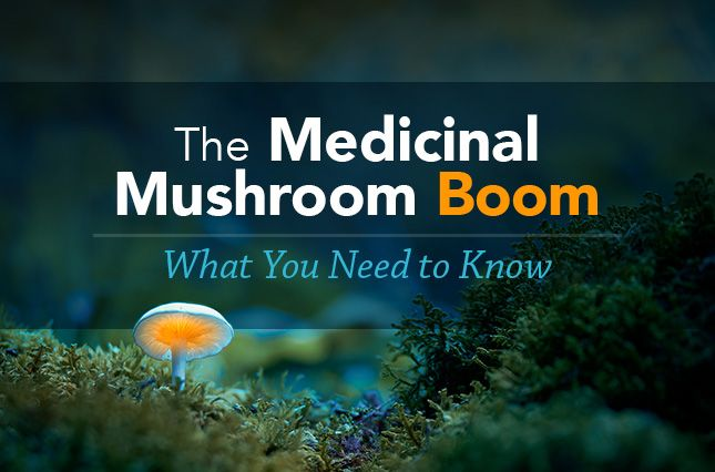 What You Need to Know About the Medicinal Mushroom Boom