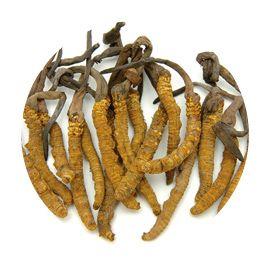 mushroom cordyceps