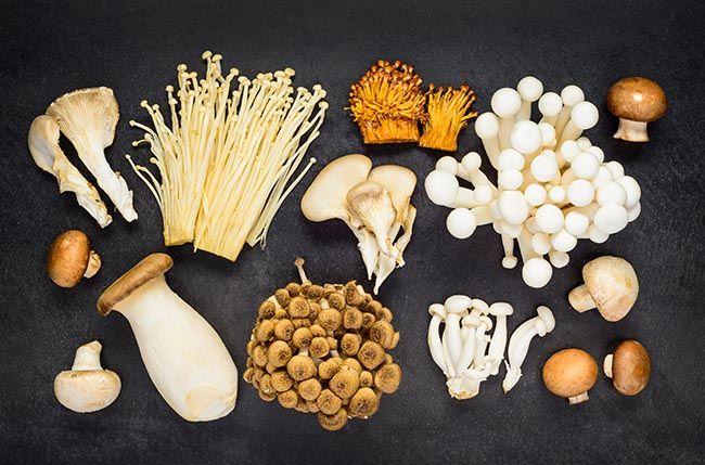 Diferent Types of Edible Mushrooms in Top View