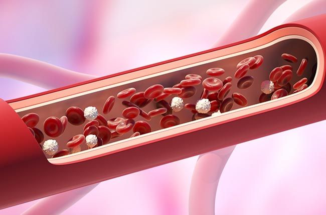 Red and white blood cells in the vein. Leukocyte normal level. 3D illustration of cell wall