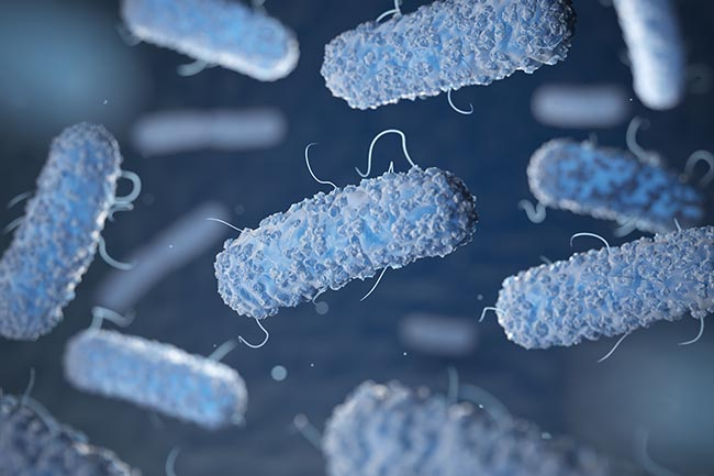 Enterobacterias. Gram-negative bacterias escherichia coli