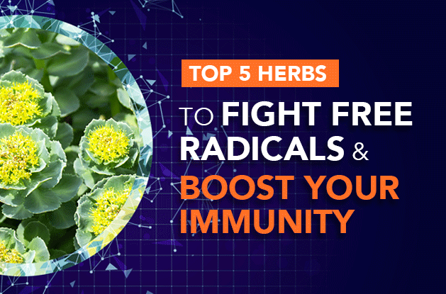Top 5 Herbs to Fight Free Radicals and Boost Your Immunity