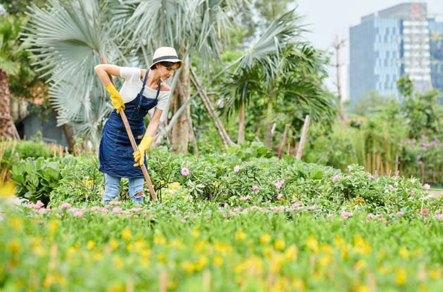 Woman in denim apron and hat working with rake in public garden