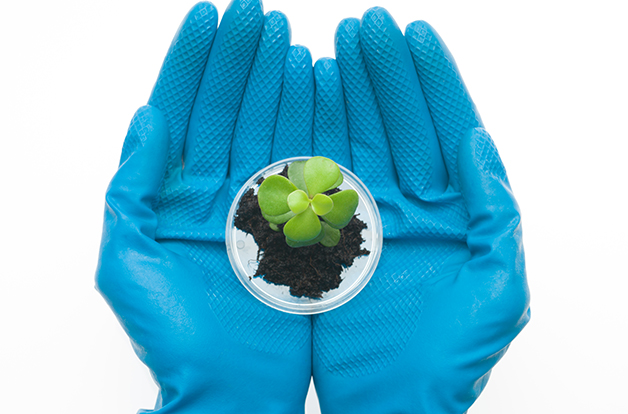 two hands in blue rubber gloves holding a petri dish with a small sprout of a leafy plant emerging from a clump of dirt, against a white background
