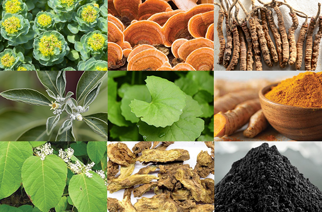 collage of nine herb photos, mixture of leaves, mushrooms, powders, and bark